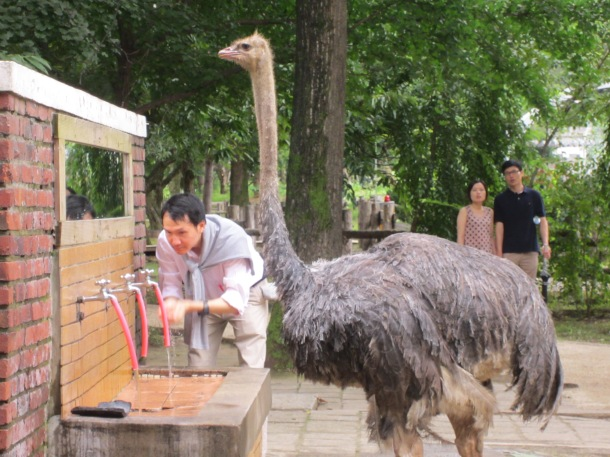 This man didn't seem too concerned to be sharing the sink with an ostrich, much like the man who strolled in past the ostrich in the bathroom to use the urinal.