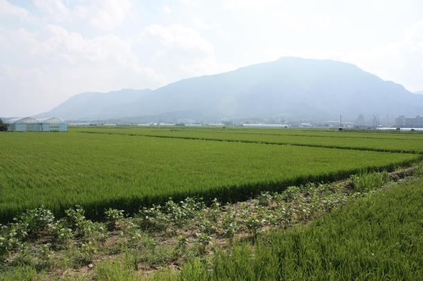 Rice paddies in Cheorwon, mmmmmmmm!
